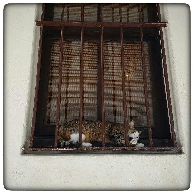feral cats 1