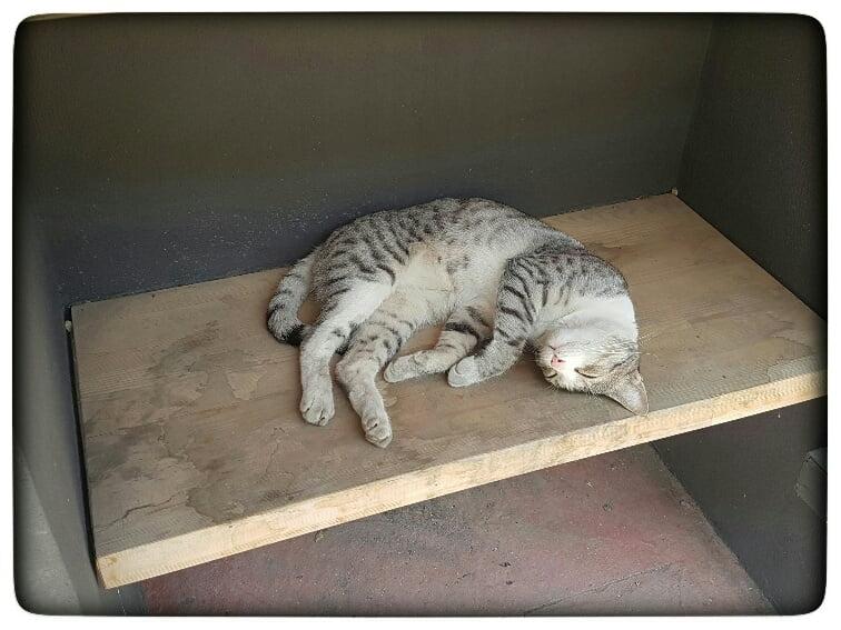 feral cats 2